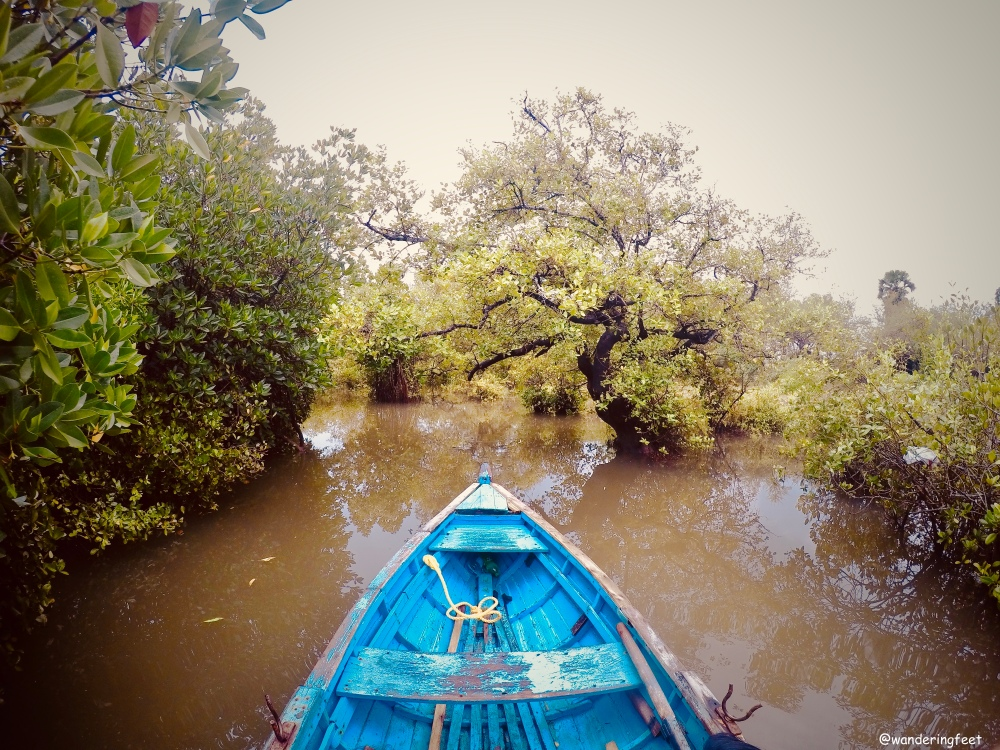 Mangroves at Pichavaram