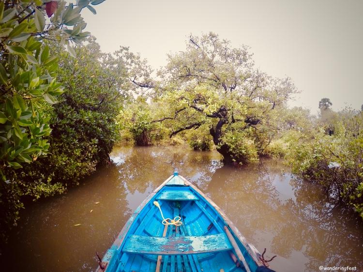 Mangroves at Pichavaram