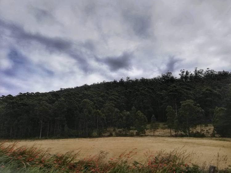 Bruny Island Landscape